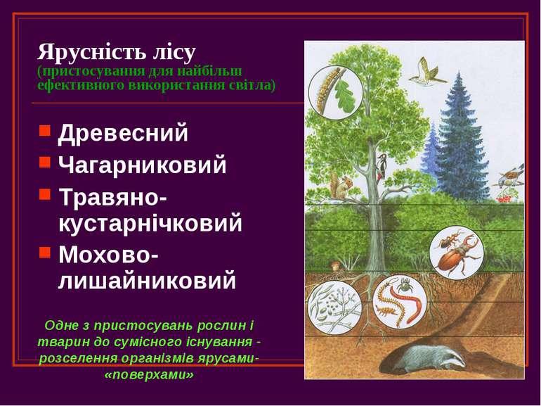 Ярусність лісу (пристосування для найбільш ефективного використання світла) Д...