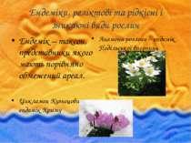 Ендеміки, реліктові та рідкісні і зникаючі види рослин Ендемік – таксон, пред...