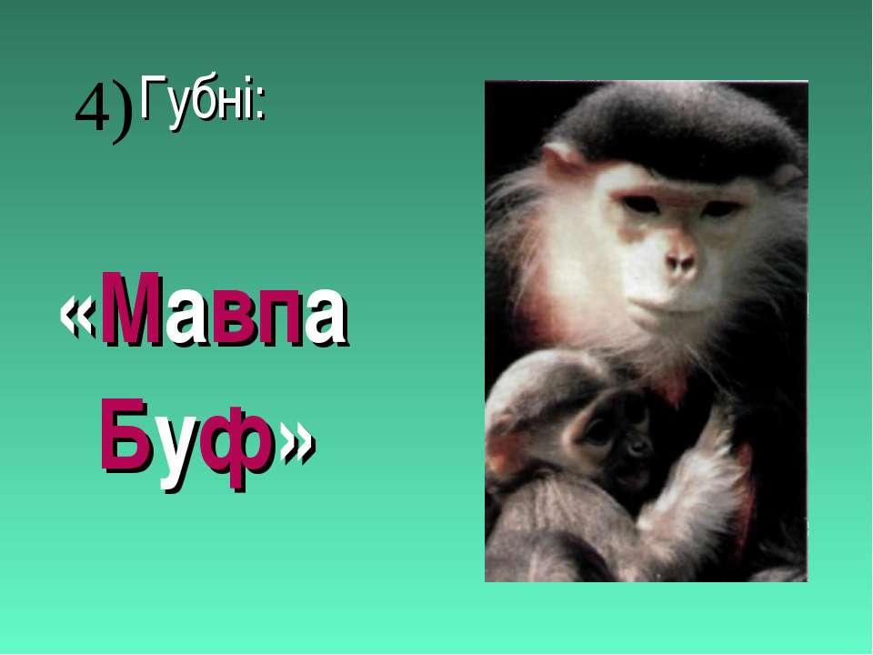 Губні: «Мавпа Буф» 4)