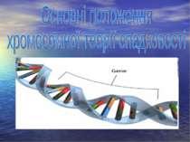 Основні положення хромосомної теорії спадковості