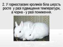 . У горностаєвих кроликів біла шерсть росте у разі підвищення температури, а ...