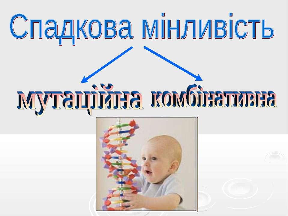 Спадкова мінливість мутаційна комбінативна