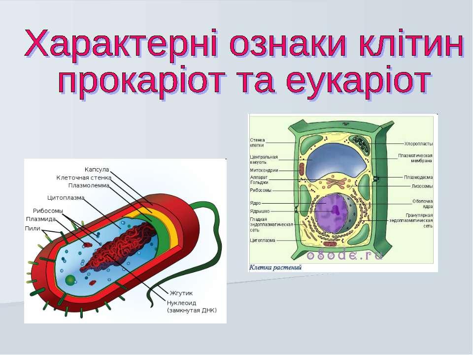 Характерні ознаки клітин прокаріот та еукаріот