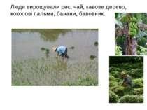 Люди вирощували рис, чай, кавове дерево, кокосові пальми, банани, бавовник.