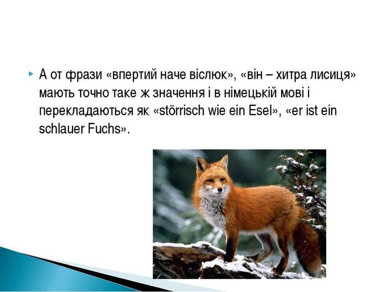 А от фрази «впертий наче віслюк», «він – хитра лисиця» мають точно таке ж зна...