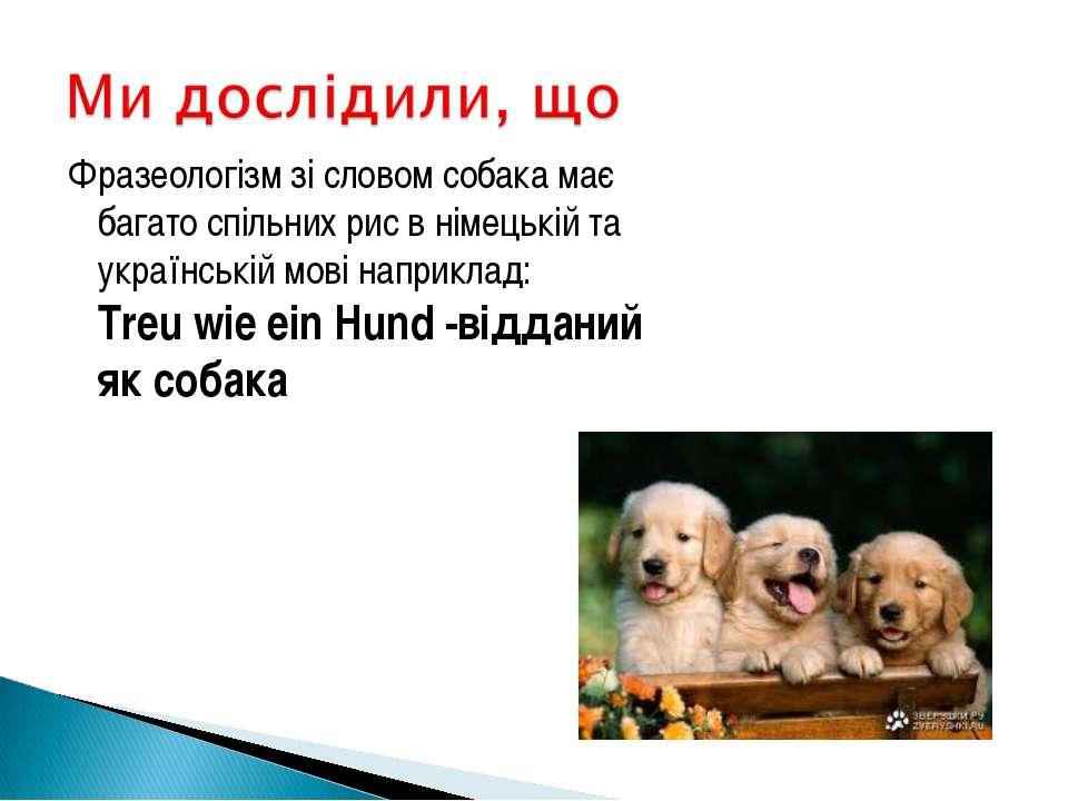 Фразеологізм зі словом собака має багато спільних рис в німецькій та українсь...