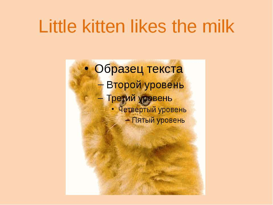Little kitten likes the milk