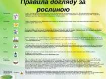 Правила догляду за рослиною Правила догляду за рослиною Температура Огірок – ...