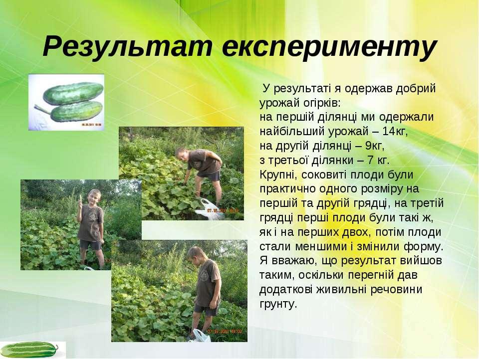 Результат експерименту У результаті я одержав добрий урожай огірків: на перші...