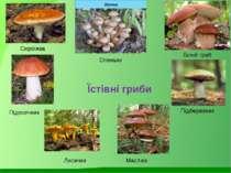 Сироїжка Білий гриб Підосичник Лисички Підберезник Маслюк Їстівні гриби Опеньки