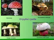 Мухомор Несправжні опеньки Сатанинський гриб Бліда поганка Отруйні гриби