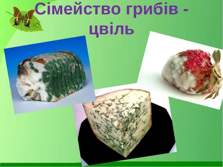 Сімейство грибів - цвіль