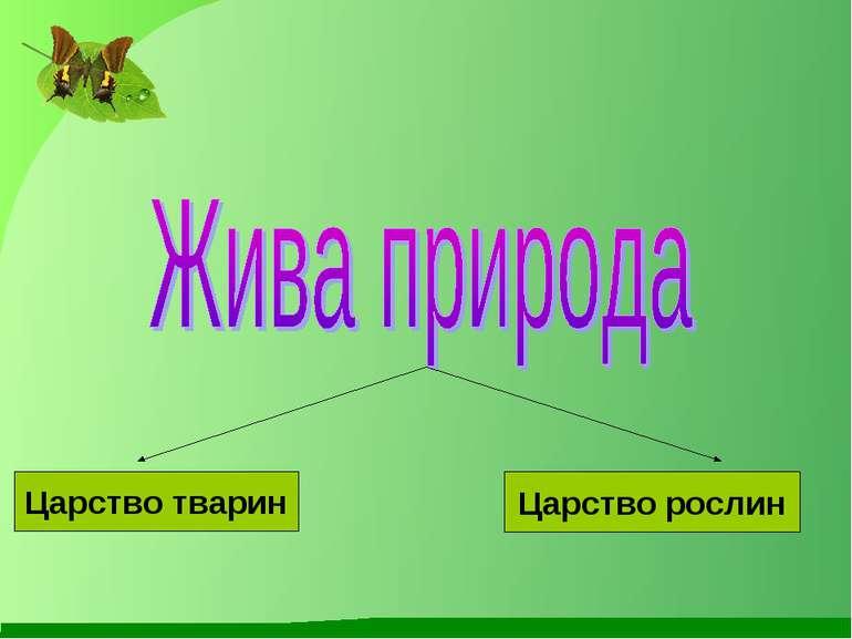Царство тварин Царство рослин