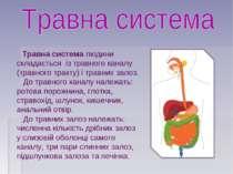 Травна система людини складається із травного каналу (травного тракту) і трав...