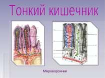 Мікроворсинки