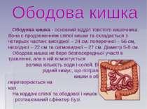 Ободова кишка- основний відділ товстого кишечника. Вона є продовженням сліпо...