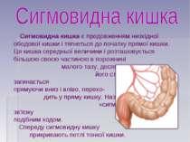 Сигмовидна кишка є продовженням низхідної ободової кишки і тягнеться до почат...