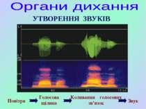 Повітря Голосова щілина Коливання голосових зв'язок Звук УТВОРЕННЯ ЗВУКІВ
