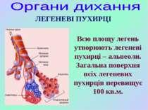 Всю площу легень утворюють легеневі пухирці – альвеоли. Загальна поверхня всі...