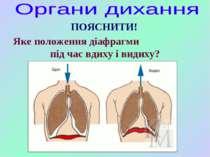 ПОЯСНИТИ! Яке положення діафрагми під час вдиху і видиху?