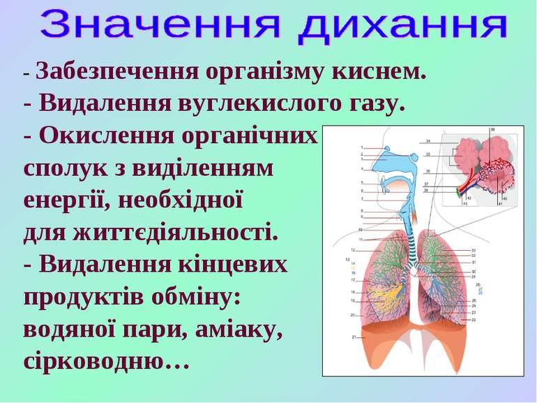- Забезпечення організму киснем. - Видалення вуглекислого газу. - Окислення о...