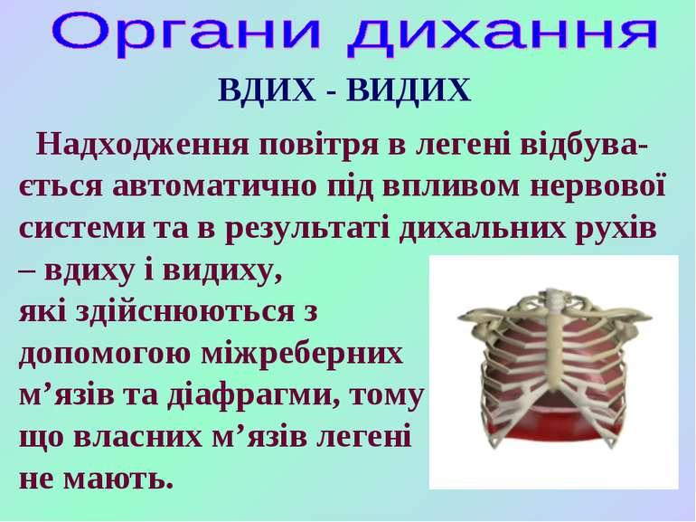 Надходження повітря в легені відбува- ється автоматично під впливом нервової ...