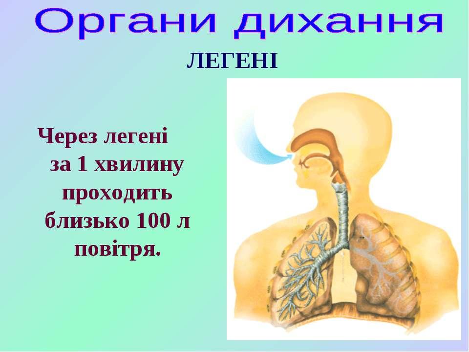 ЛЕГЕНІ Через легені за 1 хвилину проходить близько 100 л повітря.