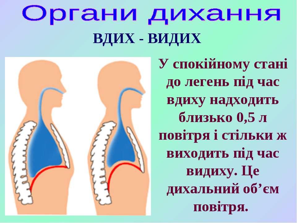 ВДИХ - ВИДИХ У спокійному стані до легень під час вдиху надходить близько 0,5...