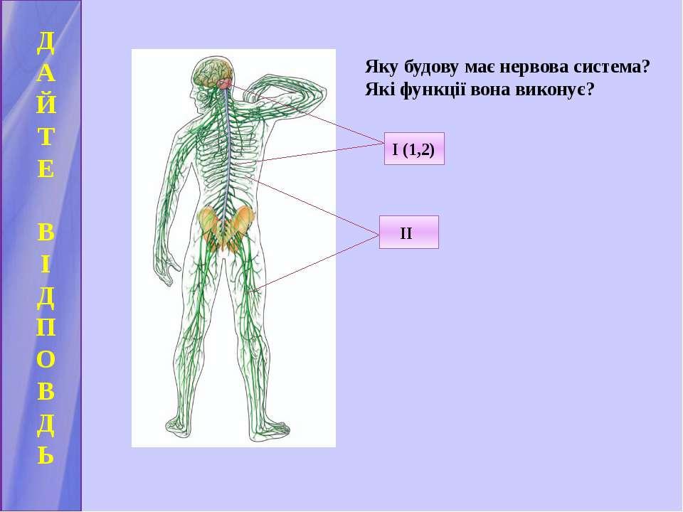 Д А Й Т Е В І Д П О В Д Ь Яку будову має нервова система? Які функції вона ви...