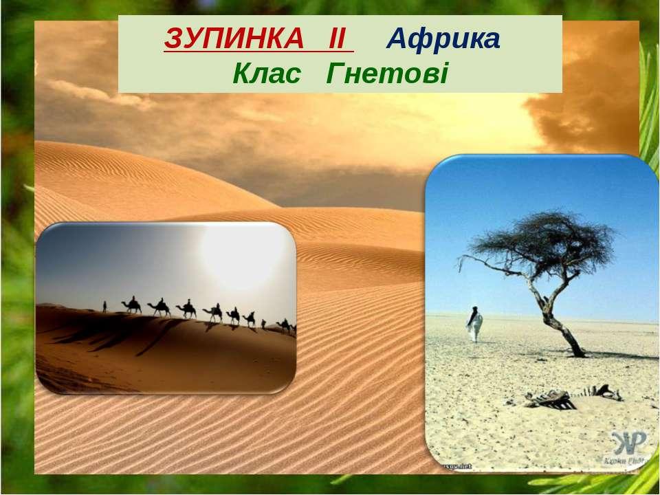 ЗУПИНКА ІІ Африка Клас Гнетові