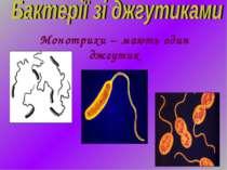 Монотрихи – мають один джгутик