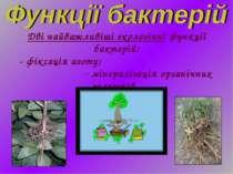 Дві найважливіші екологічні функції бактерій: - фіксація азоту; - мінералізац...