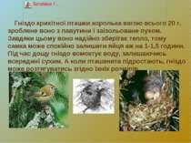 Гніздо крихітної пташки королька вагою всього 20 г. зроблене воно з павутини ...