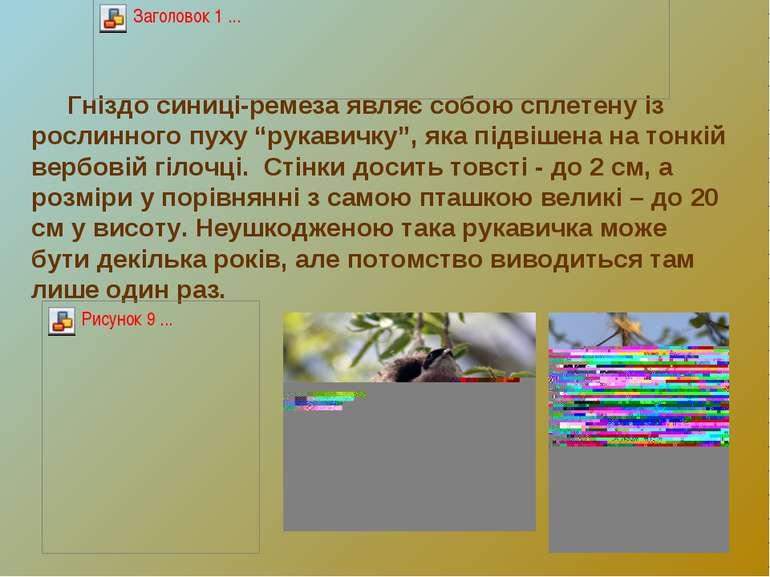 """Гніздо синиці-ремеза являє собою сплетену із рослинного пуху """"рукавичку"""", яка..."""