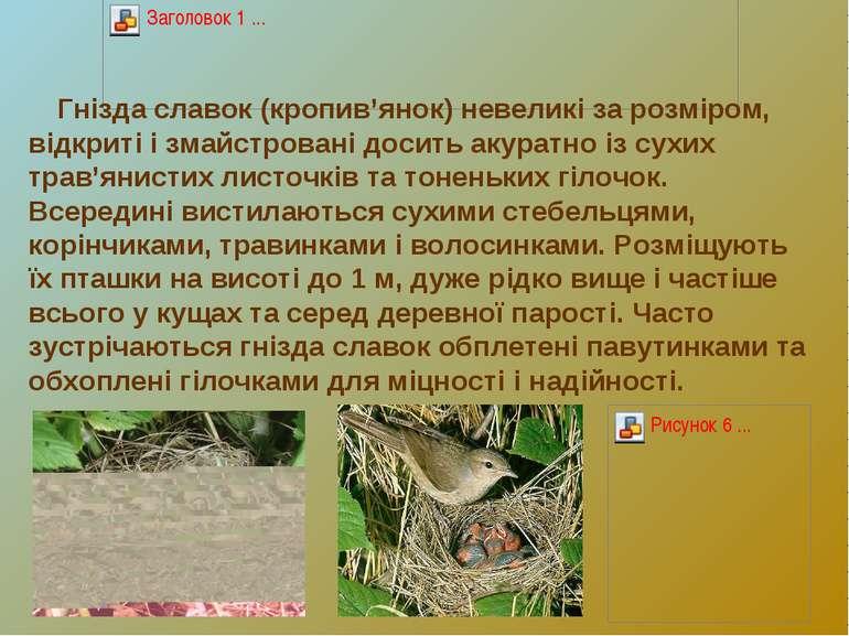 Гнізда славок (кропив'янок) невеликі за розміром, відкриті і змайстровані дос...