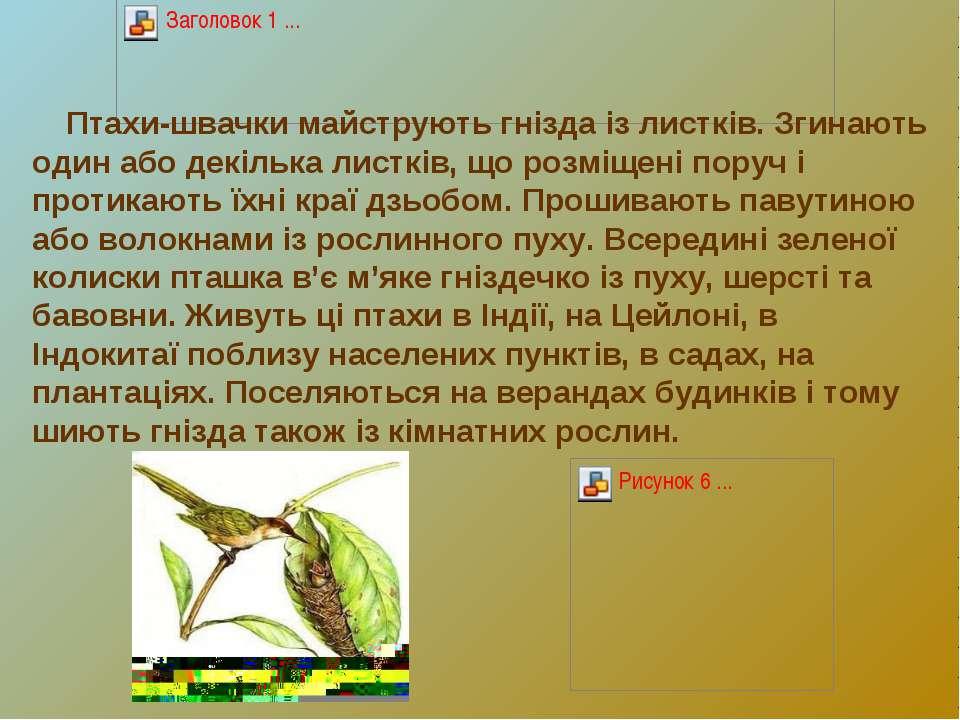 Птахи-швачки майструють гнізда із листків. Згинають один або декілька листків...