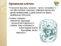 Органели клітин Органели (від грец. органон – орган, інструмент ) – постійні ...