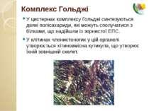 У цистернах комплексу Гольджі синтезуються деякі полісахариди, які можуть спо...