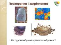 Повторення і закріплення Які одномембранні органели зображені?