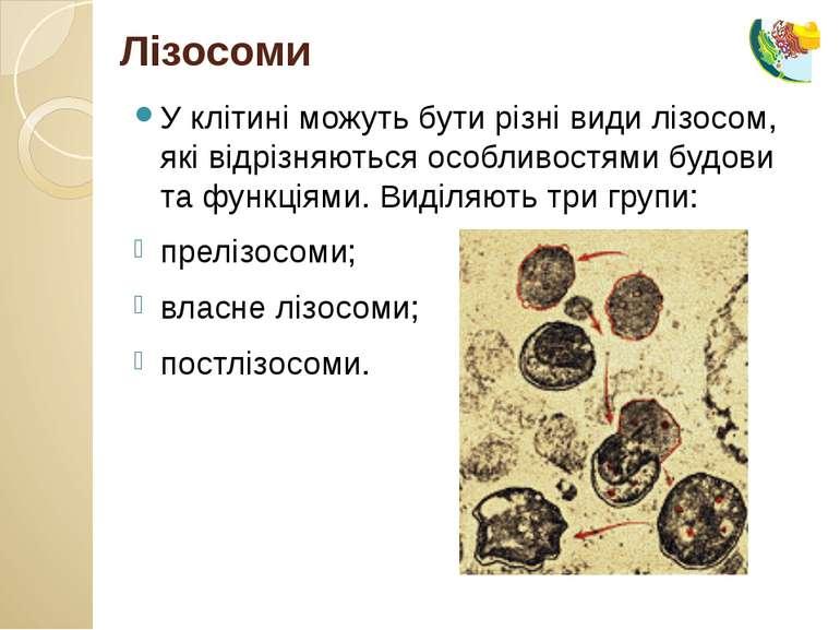 У клітині можуть бути різні види лізосом, які відрізняються особливостями буд...
