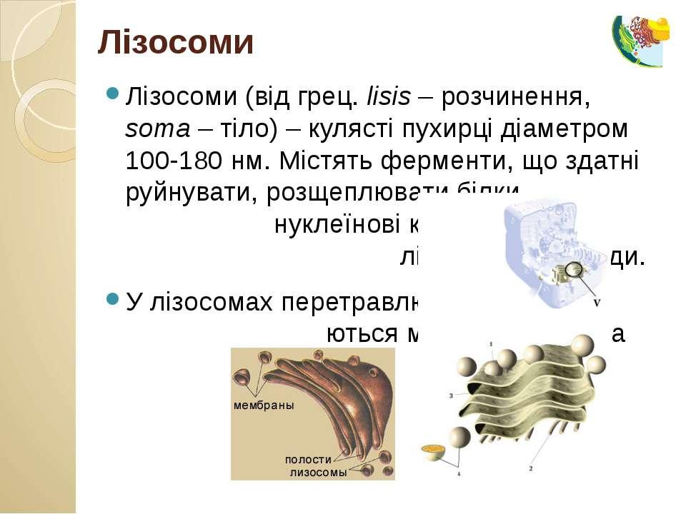 Лізосоми (від грец. lisis – розчинення, soma – тіло) – кулясті пухирці діамет...
