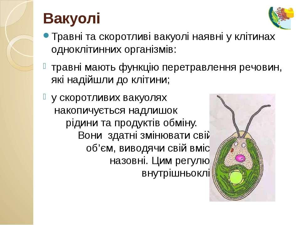 Травні та скоротливі вакуолі наявні у клітинах одноклітинних організмів: трав...