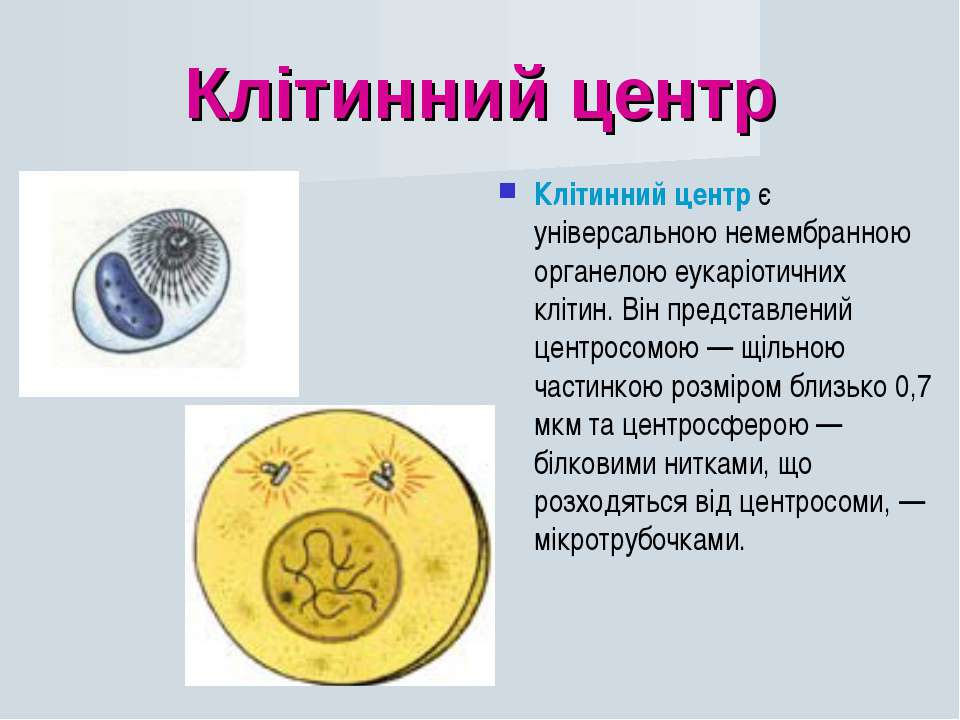 Клітинний центр Клітинний центр є універсальною немембранною органелою еукарі...