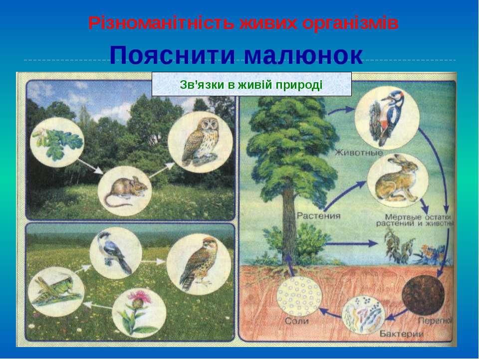 Пояснити малюнок Різноманітність живих організмів Зв'язки в живій природі