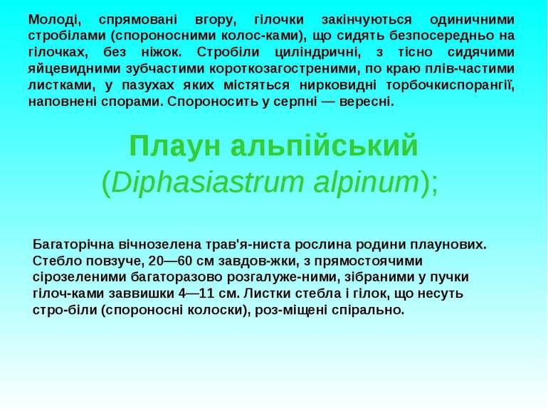 Плаун альпійський (Diphasiastrum alpinum); Молоді, спрямовані вгору, гілочки ...