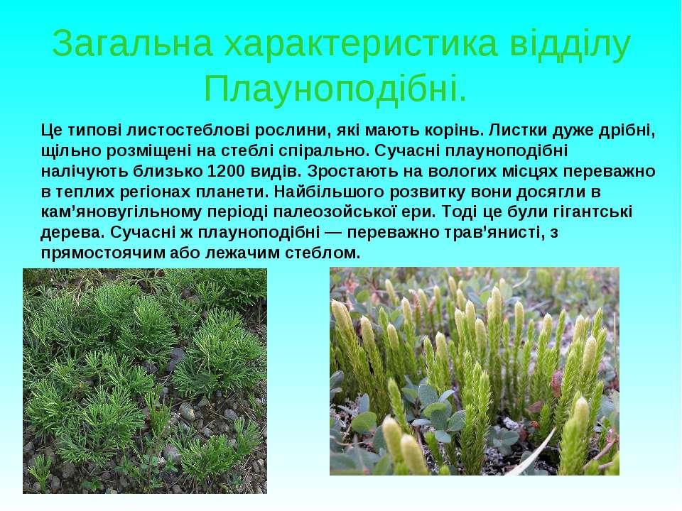 Загальна характеристика відділу Плауноподібні. Це типові листостеблові рослин...