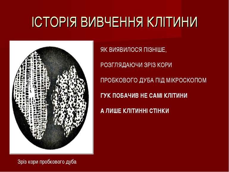 ІСТОРІЯ ВИВЧЕННЯ КЛІТИНИ Зріз кори пробкового дуба ЯК ВИЯВИЛОСЯ ПІЗНІШЕ, РОЗГ...