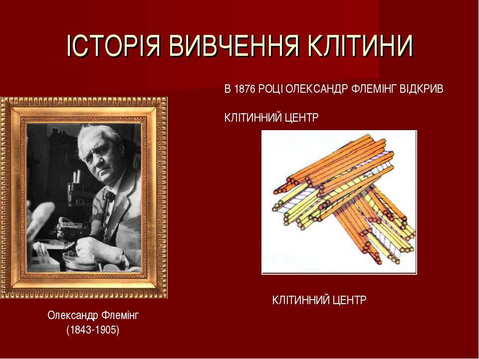 ІСТОРІЯ ВИВЧЕННЯ КЛІТИНИ Олександр Флемінг (1843-1905) В 1876 РОЦІ ОЛЕКСАНДР ...
