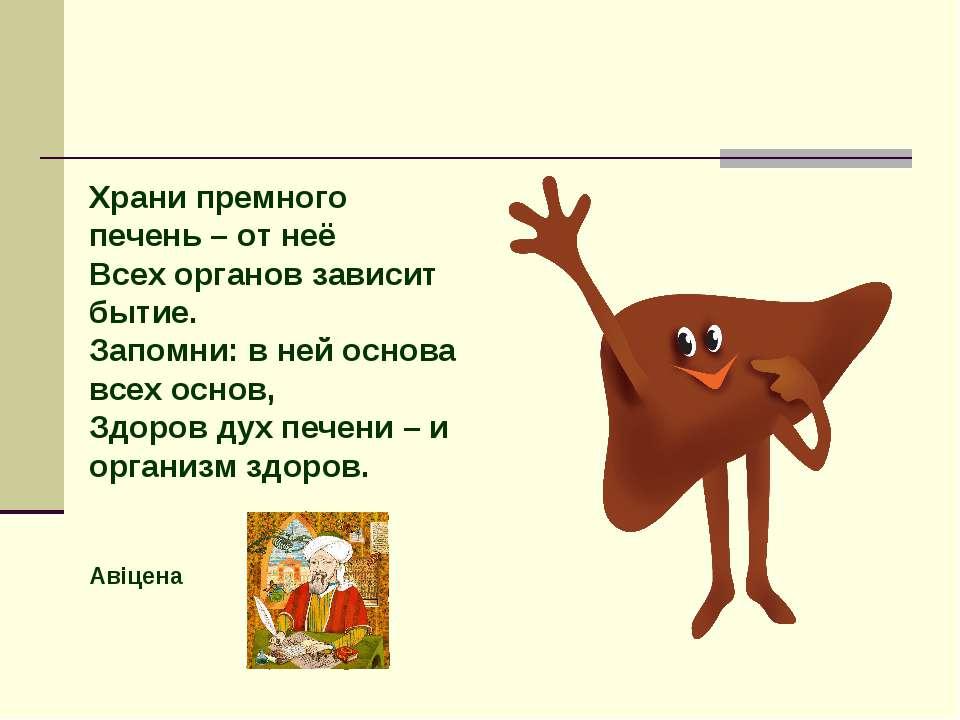 Храни премного печень – от неё Всех органов зависит бытие. Запомни: в ней осн...
