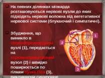 На певних ділянках міокарда розташовуються нервові вузли до яких підходять не...